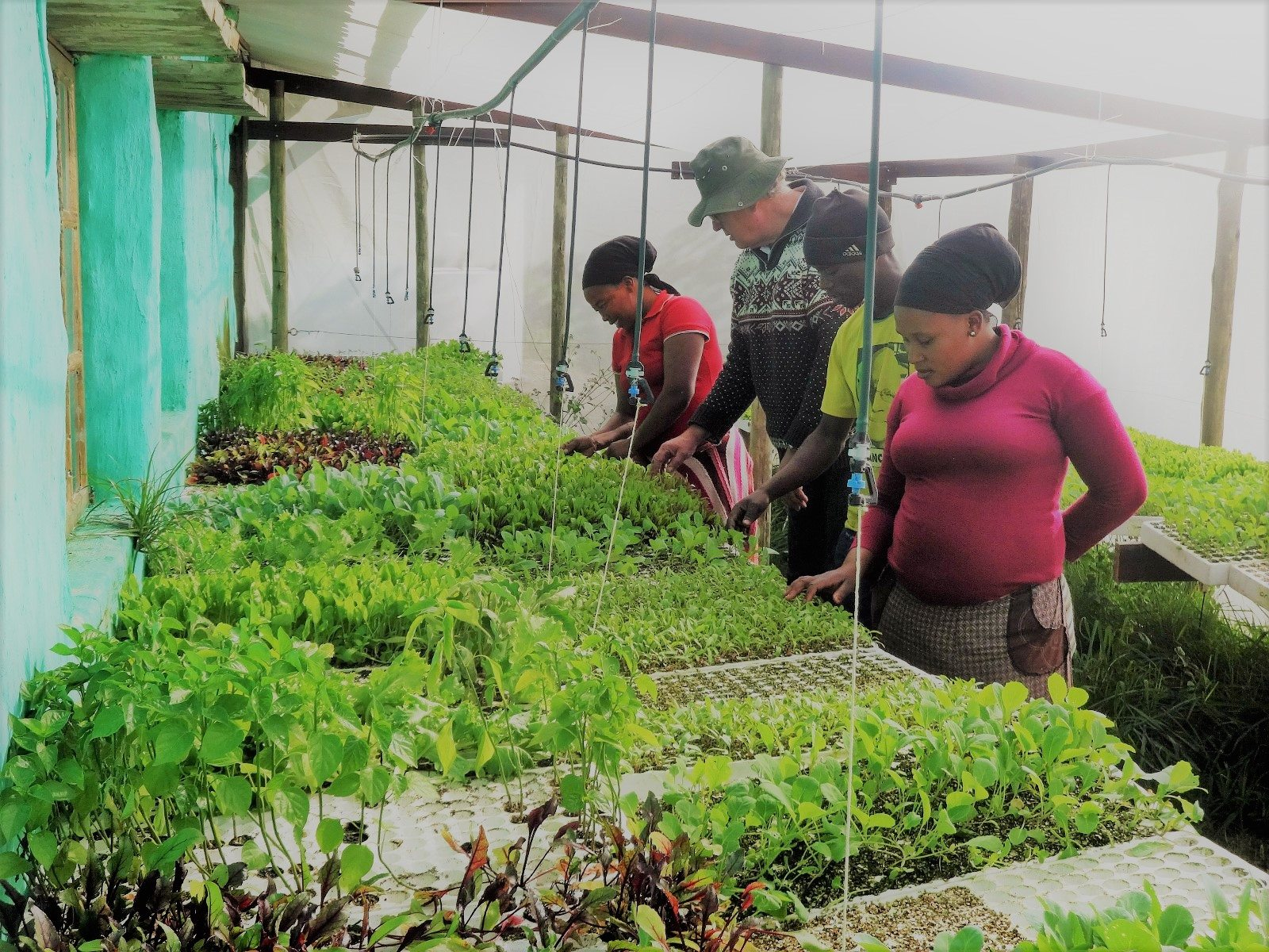 Die Gemüsesetzlinge des Bulungula Incubator