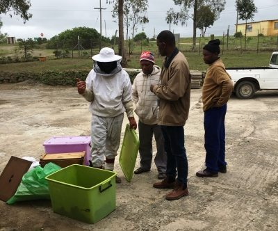project particpants bring new bee swarm to the center