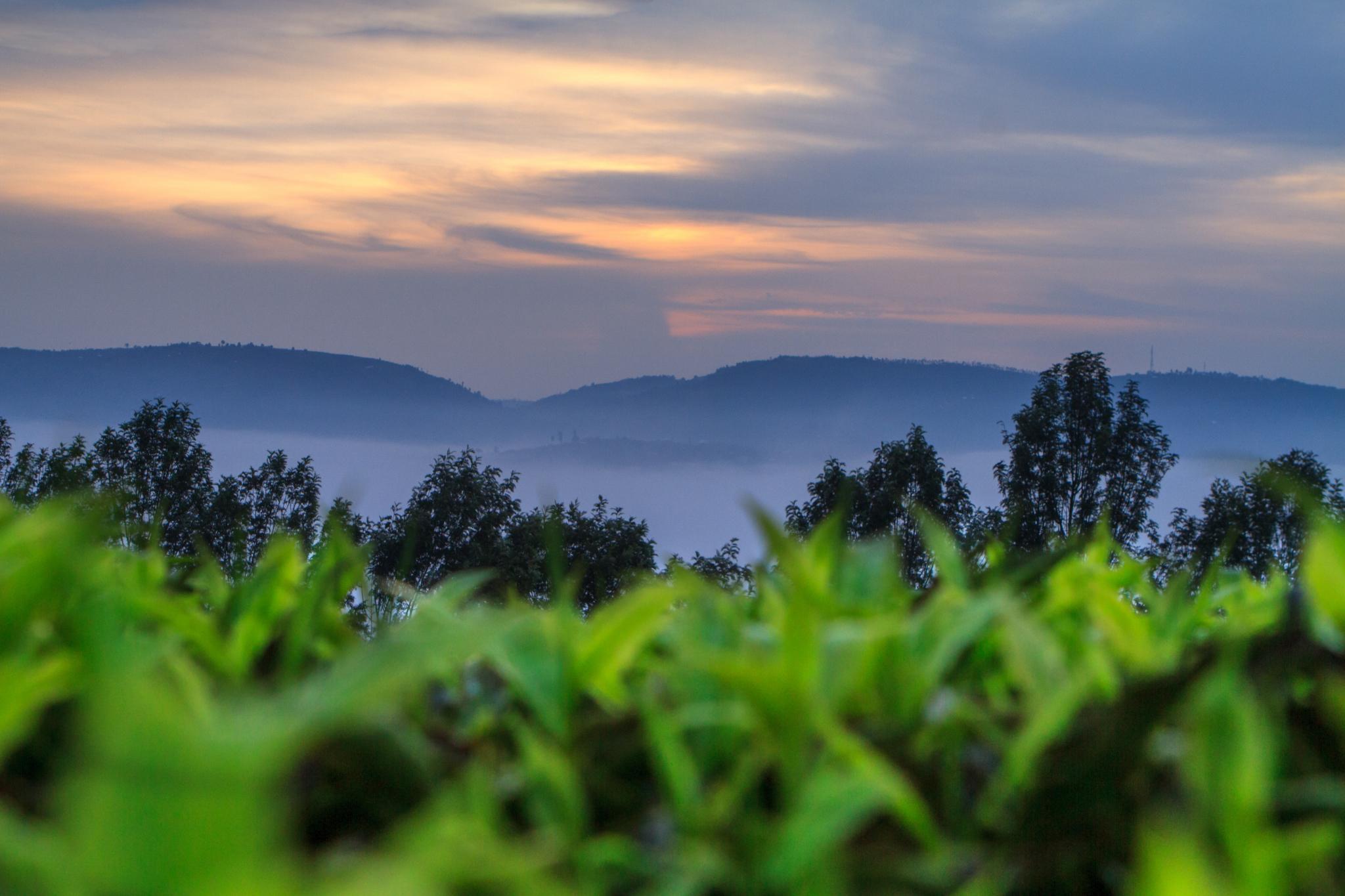 Die Stay Alliance Ruanda – Gemeinsam sind wir stark